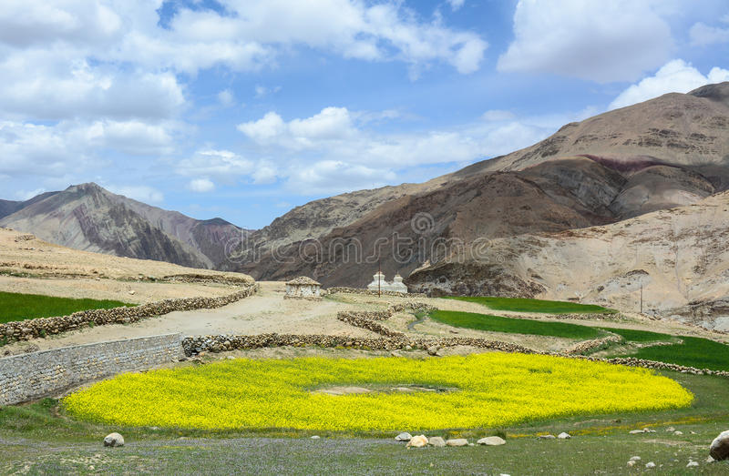 Brassicaceae flower fields. With mountains background stock photography