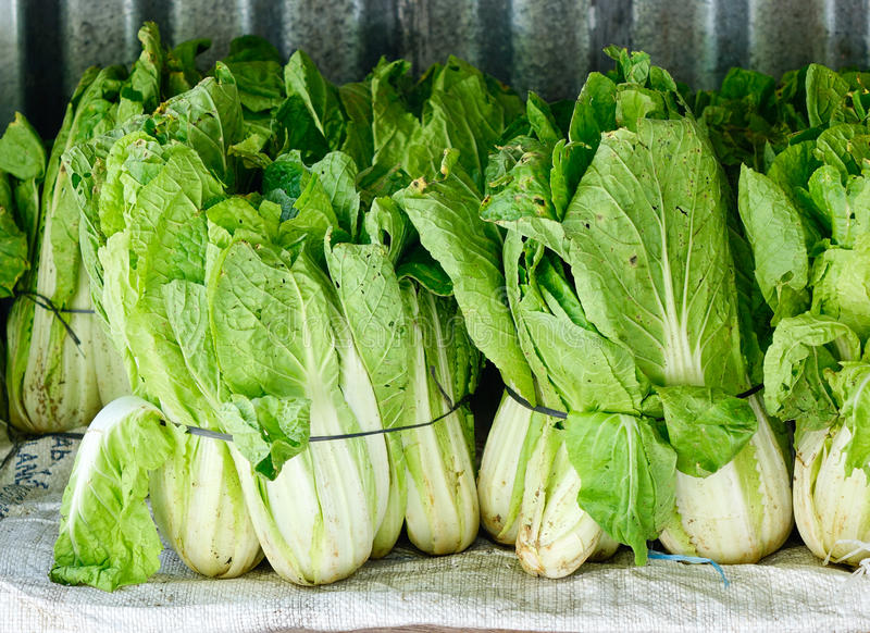 Brassicaceae vegetables. At the market royalty free stock photos