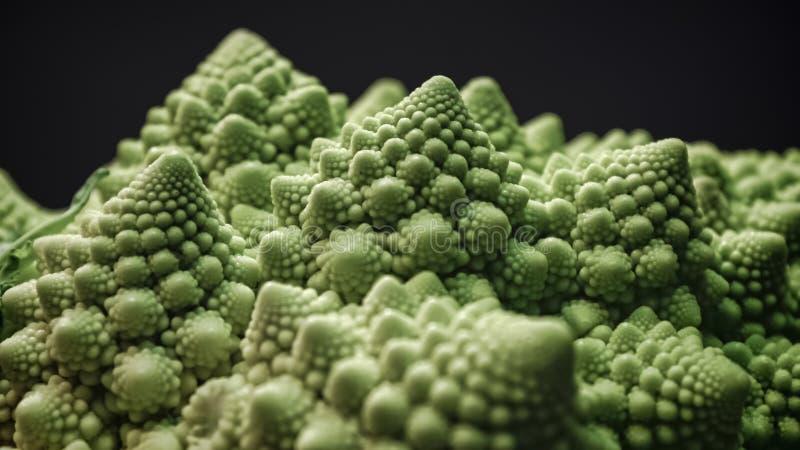 Brassicaoleracea, Romanesco broccoli arkivbilder