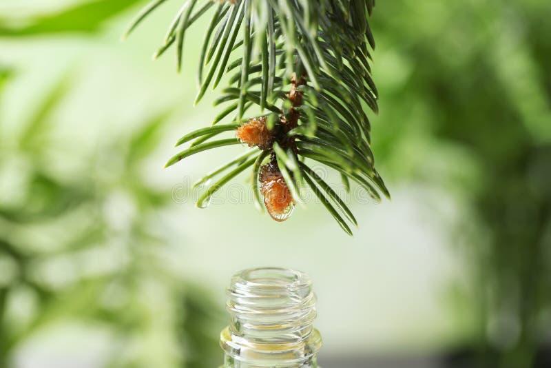 Bratenfett des ätherischen Öls vom Tannenzweig in Glasflasche auf unscharfem Hintergrund, lizenzfreie stockbilder