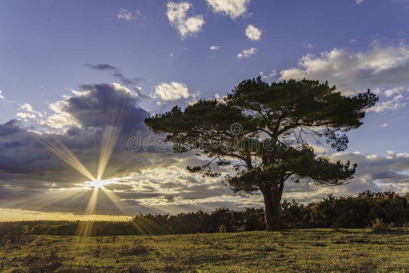 Bratley drzewo obrazy stock