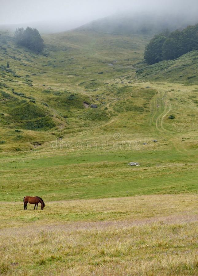 Braun horse in a mountain landscape of the Montenegro in a foggy day. Travel destination. Summertime and holidaytime. Eating horse. Field of grass and shurbs royalty free stock photo
