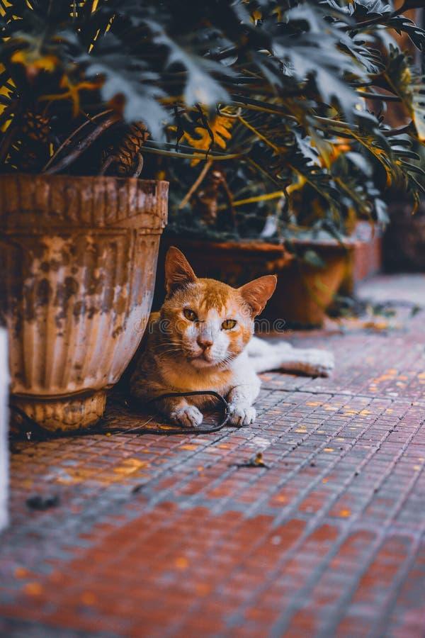 Braune Katze in der Nähe von Grau Vase stockbild