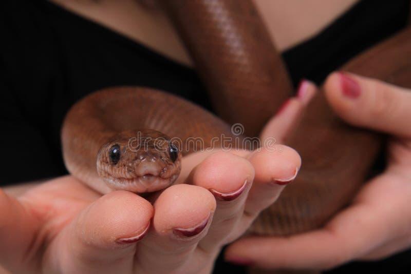 braune Schlange in der menschlichen Hand lizenzfreie stockbilder