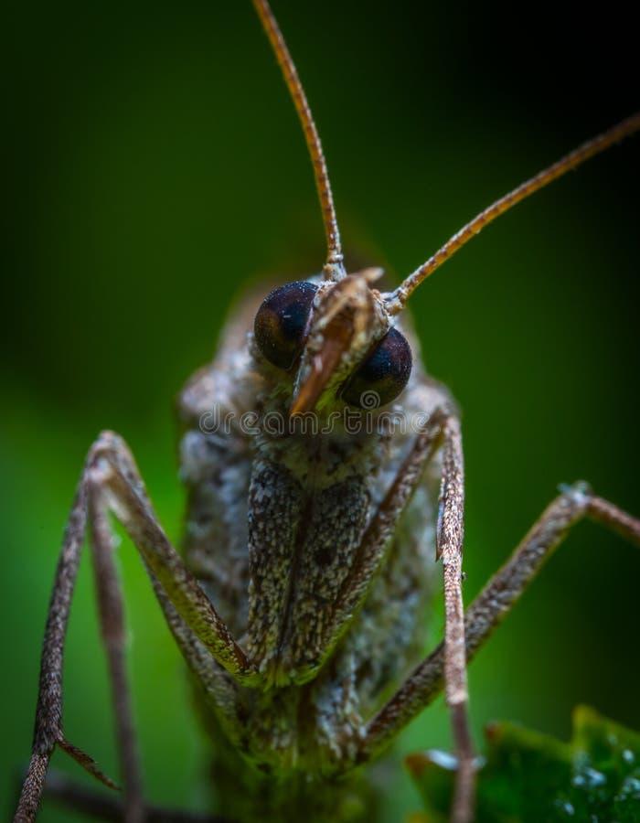 Braunes Insekt in Abschlussfoto lizenzfreie stockbilder