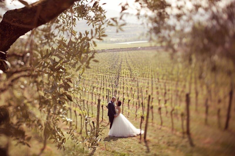 Braut und Bräutigam in einem Weinberg stockfotos