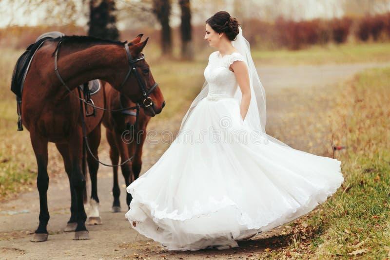 Brautrausche, die hinter den braunen Pferden stehen stockbild