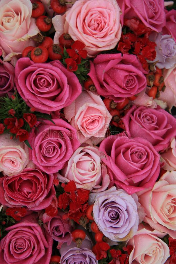 Brautrosen im Rosa und im Purpur lizenzfreie stockfotografie