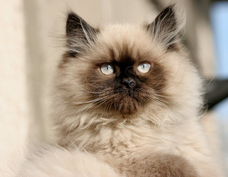 Download Brave Cat stock image. Image of small, macro, kitty, nice - 867745