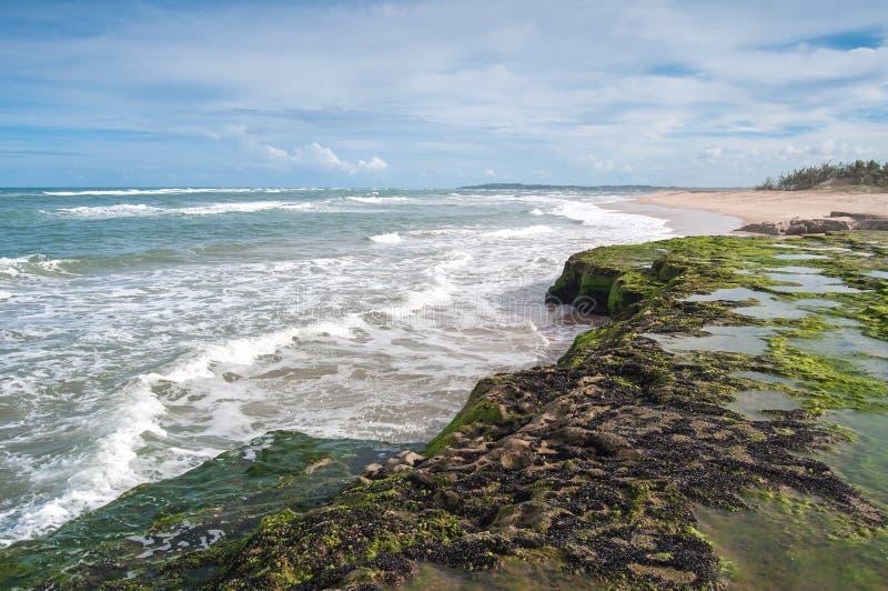 Tambaba Beach in Brazil stock photo  Image of wave, tropics - 19057044