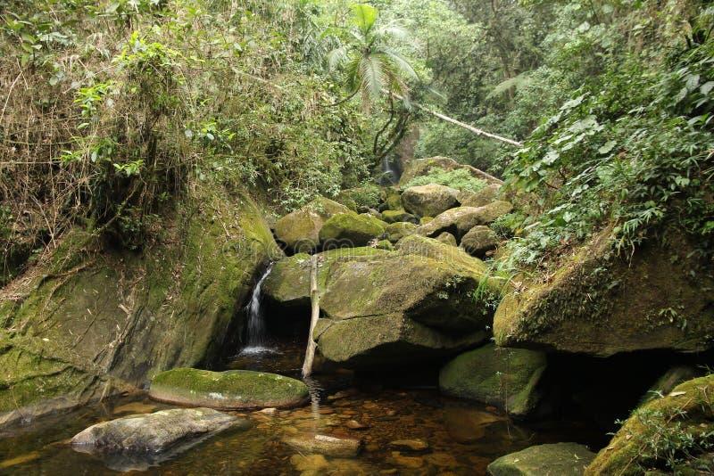 Brazil jungle. Brazil - jungle stream in Mata Atlantica (Atlantic Rainforest biome) in Serra dos Orgaos National Park (Rio de Janeiro state royalty free stock images