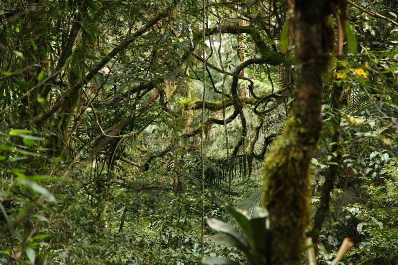 Rainforest flora. Brazil - jungle flora in Mata Atlantica (Atlantic Rainforest biome) in Serra dos Orgaos National Park (Rio de Janeiro state royalty free stock photos