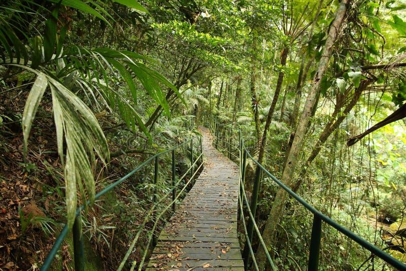 Jungle boardwalk, Brazil. Brazil - jungle hiking trail boardwalk in Mata Atlantica (Atlantic Rainforest biome) in Serra dos Orgaos National Park (Rio de Janeiro stock photos