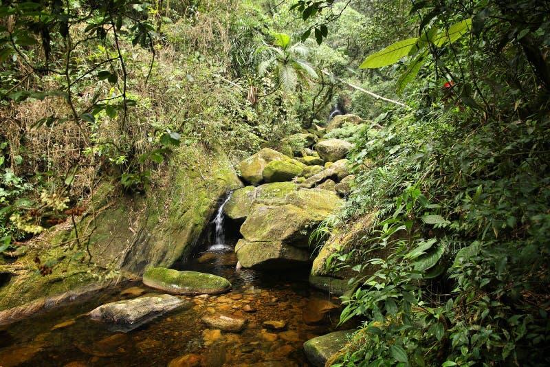 Brazil nature. Jungle flora in Serra dos Orgaos National Park. Mata Atlantica (Atlantic Rainforest royalty free stock images