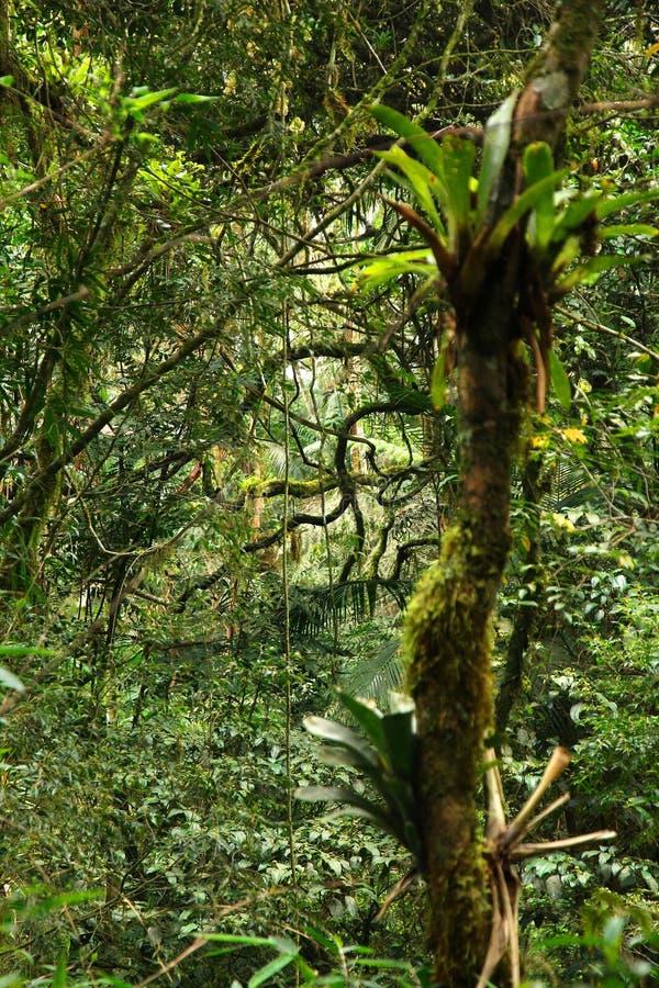 Mata Atlantica, Brazil. Brazil nature. Jungle flora in Serra dos Orgaos National Park. Mata Atlantica (Atlantic Rainforest royalty free stock photo