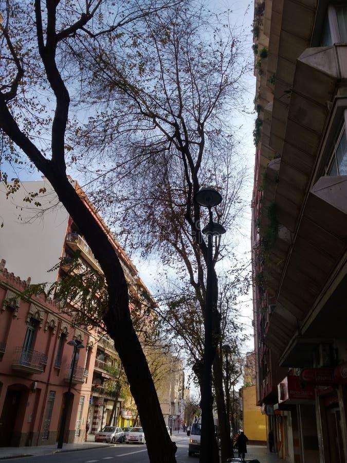 brazil naturnovember foto 2007 royaltyfri foto