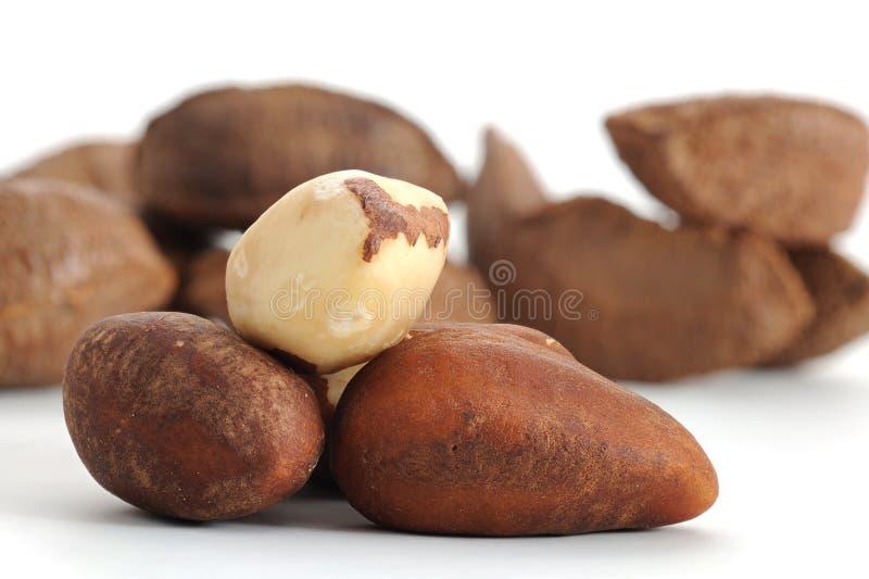 Download Brazil Nut stock image. Image of ingredient, white, close - 15505851