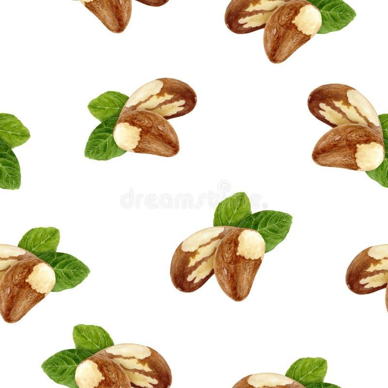 Brazil nut hand drawn watercolor illustration. Seamless pattern. Brazil nut watercolor pattern. Hand drawn watercolor illustration royalty free stock image