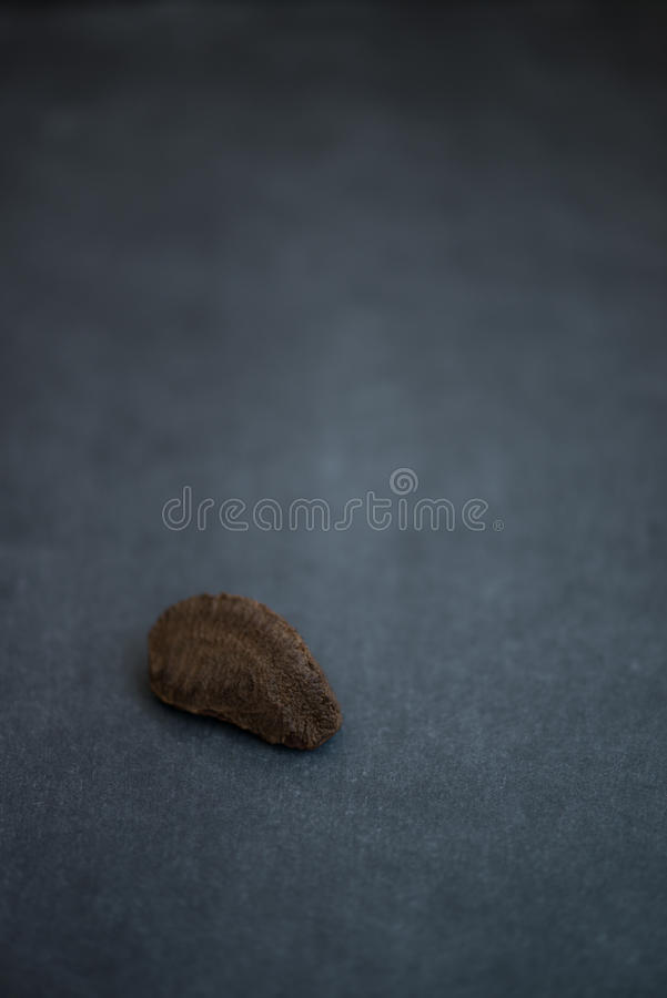 Brazil Nut resting on dark background stock photo