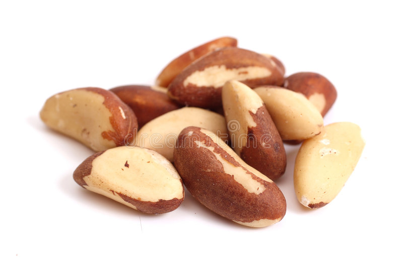Download Brazil nuts stock photo. Image of group, seed, nature - 7219654