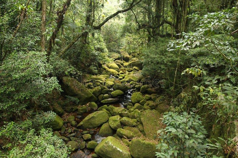 Brazil rainforest. Brazil - jungle view in Mata Atlantica (Atlantic Rainforest ecosystem) in Serra dos Orgaos National Park (Rio de Janeiro state stock photography