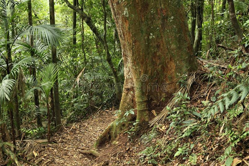 Brazil Serra dos Orgaos. Brazil - jungle hiking trail in Mata Atlantica (Atlantic Rainforest biome) in Serra dos Orgaos National Park (Rio de Janeiro state stock image