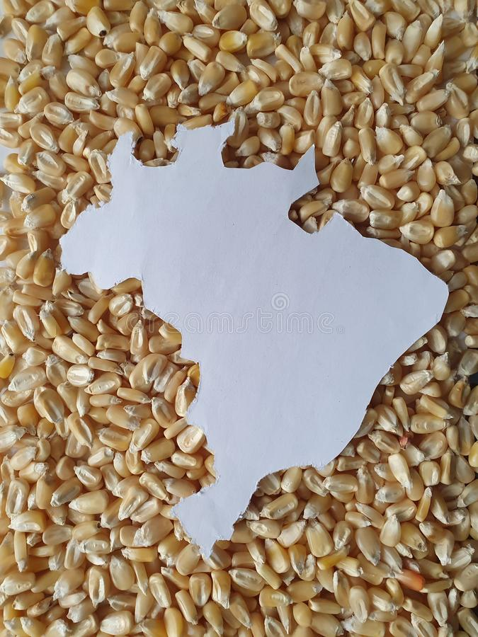 Brazil territory map in white and background with corn kernels stock image