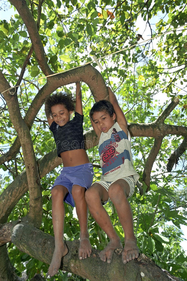Brazilian children climbing in tropical tree royalty free stock images