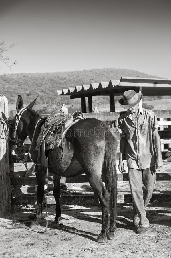 Free Brazilian Cowboy With Mule Royalty Free Stock Image - 54112116