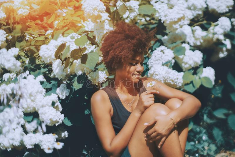 Brazilian girl in public garden with camomile. Glamorous young black curly female student is sitting during break in front of beautiful white flowers which are royalty free stock photos
