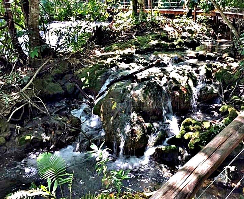 Brazilian streams. Water nature beauty stock photos