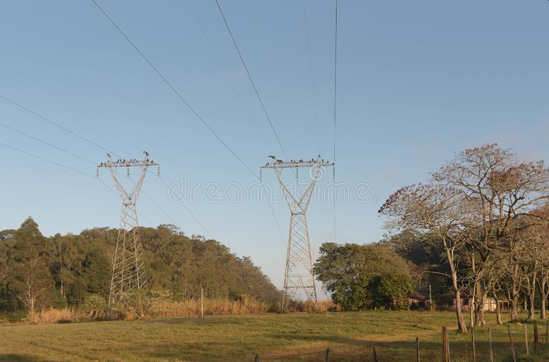 Buzzards and vultures of electric power 02.jpg stock photo
