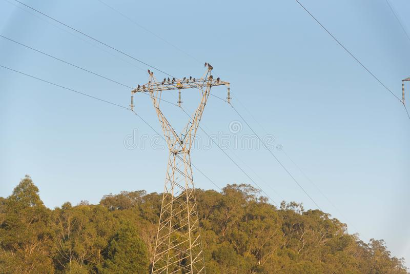 Buzzards and vultures of electric power 01 royalty free stock photos