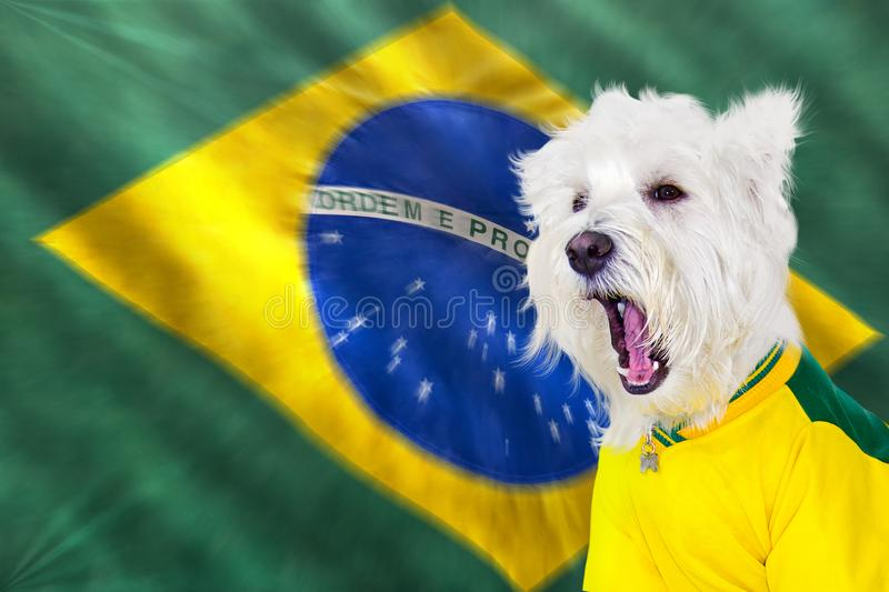 Screaming west at brazilian game royalty free stock photo