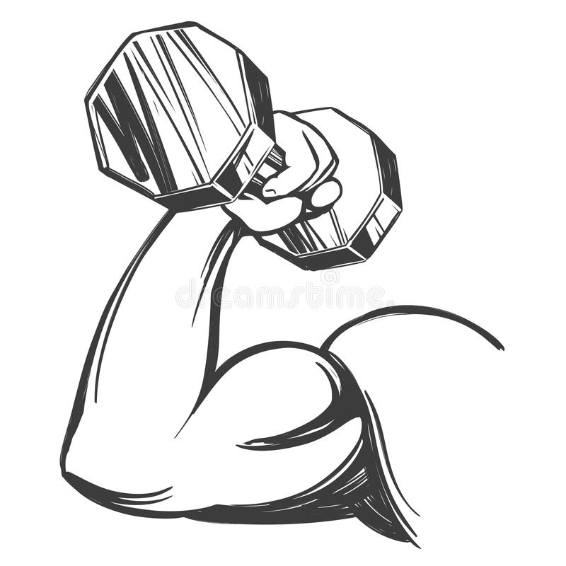 Brazo, bíceps, mano fuerte que lleva a cabo una pesa de gimnasia, bosquejo dibujado mano del ejemplo del vector de la historieta  libre illustration