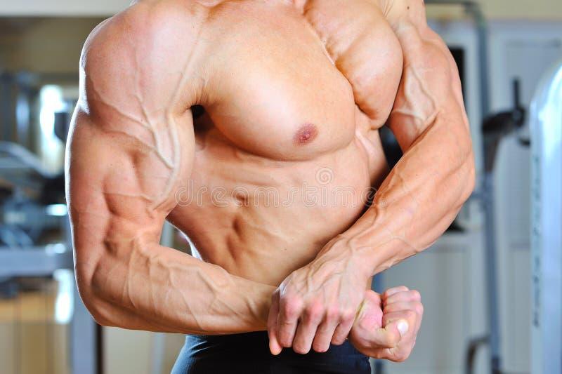 Brazos Modelo Masculinos Musculosos Con El Torso Imagen de archivo ...