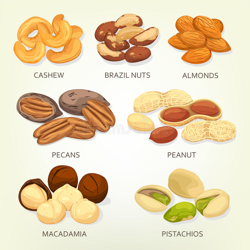 Brazylia dokrętki i nerkodrzew owoc ziarna, adra ilustracji