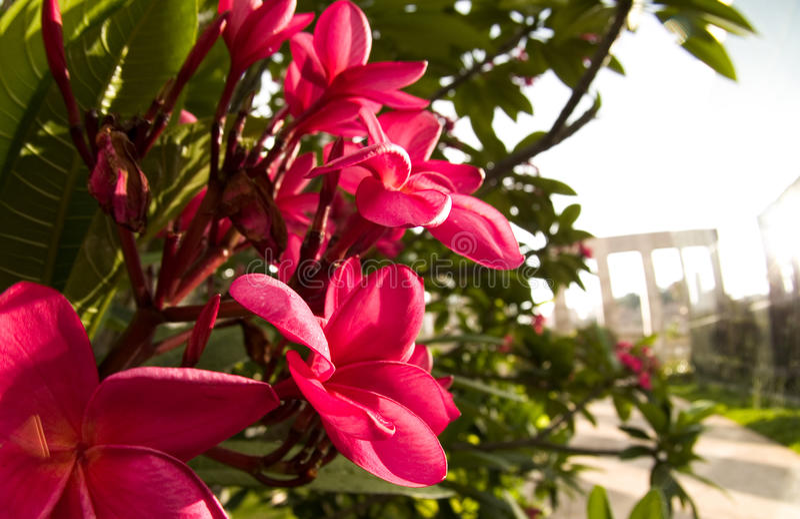 brazylijscy kwiaty zdjęcie royalty free