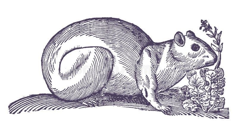 Brazylijski królika doświadczalnego cavia aperea obok rośliny ilustracja wektor