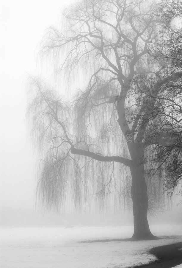 Bre tree in fog. Bare tree in winter fog stock images