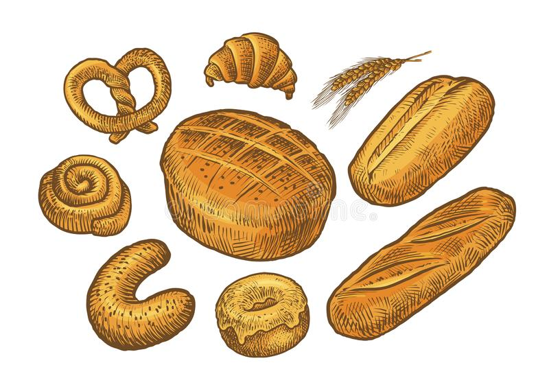 Bread, baked goods sketch. Bakery, bakeshop, food concept. Vintage vector. Bread, baked goods sketch. Bakery, bakeshop food concept Vintage royalty free illustration