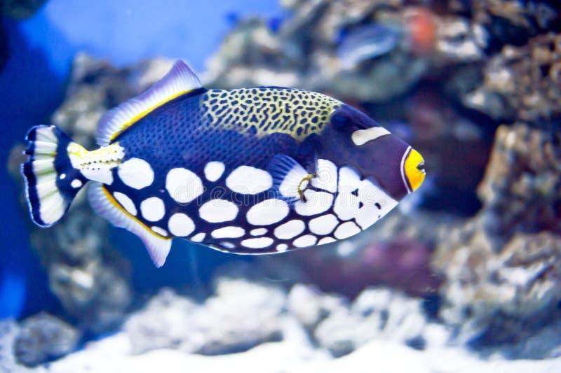 A bread fish royalty free stock photos