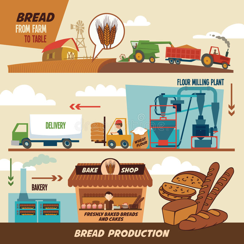Bread production stages vector illustration
