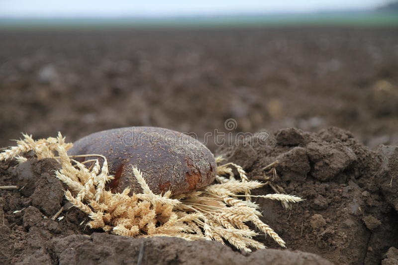 Bread in a soil stock photos