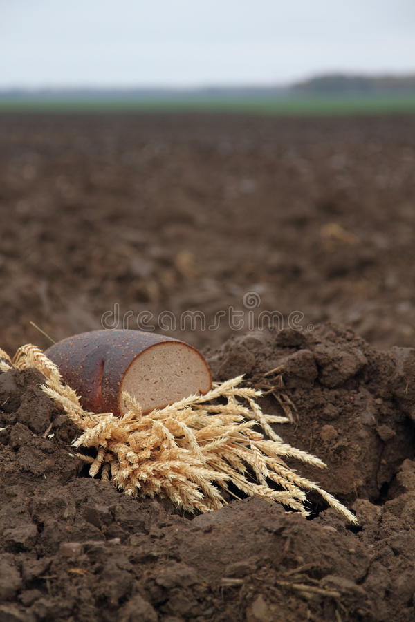 Bread in a soil stock images