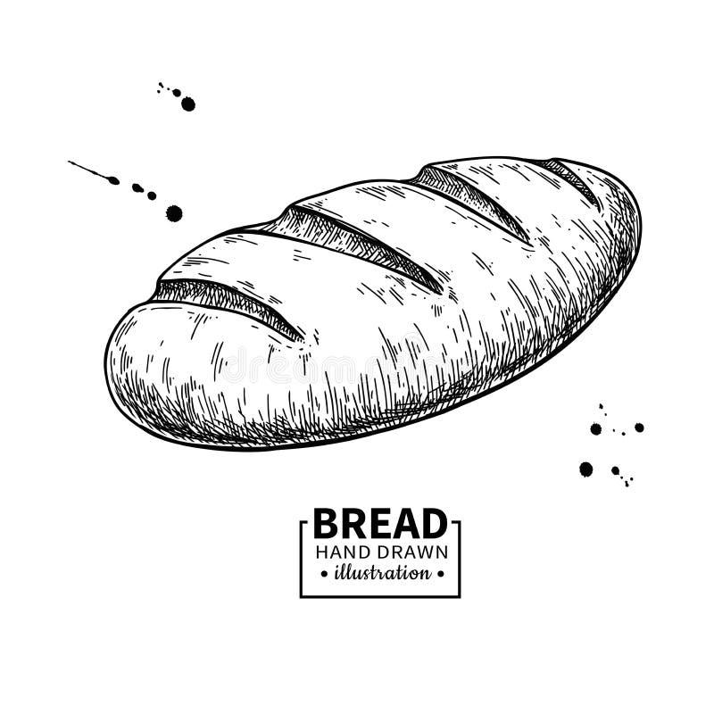 Bread vector drawing. Bakery product sketch. Vintage food vector illustration