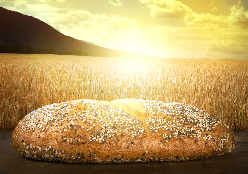 Bread and wheat cereal crops at sunset. Cereal crops on the background stock photography