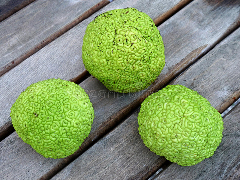 Download Breadfruit Stock Photo - Image: 45625783