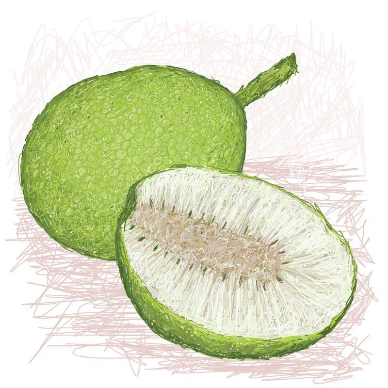 Download Breadfruit Skinned Rozmaitość Cała I Połówka Pokrajać Ilustracji - Ilustracja złożonej z botaniczny, wiecznotrwały: 28952943