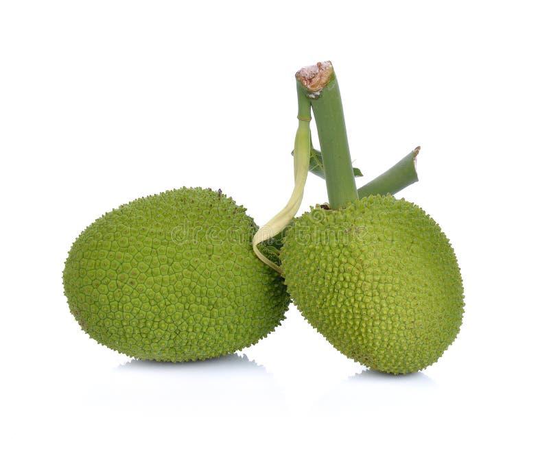 Breadfruit;young fruit jackfruit on white background royalty free stock photography